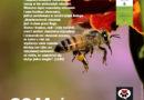 Światowy Dzień Pszczół, 5. dzień obchodów Tygodnia Laudato Si'