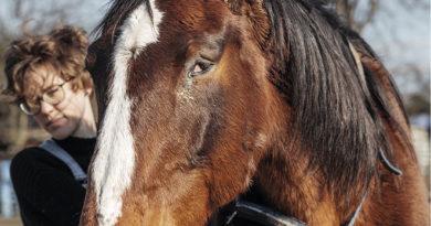 Starzeje się każdy, nawet koń