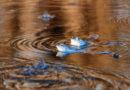 Żaba jest… niebieska