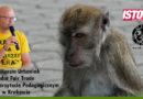 Międzynarodowy Dzień Małpy