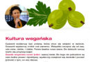 Kultura wegańska